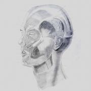 Osteotomy Sagittal Mandibular
